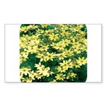 Coreopsis Moonbeam Rectangle Sticker