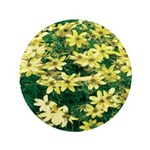 Coreopsis Moonbeam 3.5
