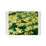 Coreopsis Moonbeam Rectangle Magnet