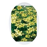 Coreopsis Moonbeam Oval Ornament