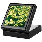 Coreopsis Moonbeam Keepsake Box