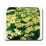 Coreopsis Moonbeam Mousepad