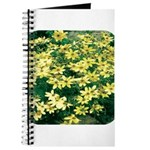 Coreopsis Moonbeam Journal