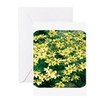 Coreopsis Moonbeam Greeting Cards (Pk of 10)
