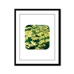 Coreopsis Moonbeam Framed Panel Print