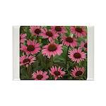 Echinacea Magnus Rectangle Magnet (10 pack)