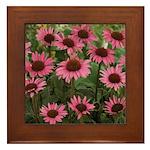 Echinacea Magnus Framed Tile