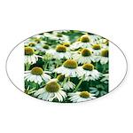 Echinacea White Coneflower Oval Sticker
