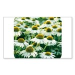 Echinacea White Coneflower Rectangle Sticker