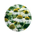 Echinacea White Coneflower 3.5