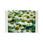 Echinacea White Coneflower Rectangle Magnet (10 pa