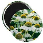 Echinacea White Coneflower Magnet