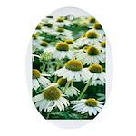 Echinacea White Coneflower Oval Ornament