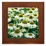 Echinacea White Coneflower Framed Tile
