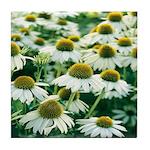 Echinacea White Coneflower Tile Coaster