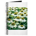 Echinacea White Coneflower Journal