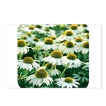 Echinacea White Coneflower Postcards (Package of 8