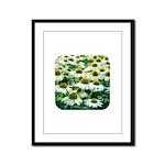 Echinacea White Coneflower Framed Panel Print