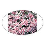 Phlox Candy Stripe Oval Sticker