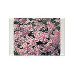 Phlox Candy Stripe Rectangle Magnet