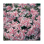 Phlox Candy Stripe Tile Coaster