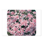 Phlox Candy Stripe Postcards (Package of 8)