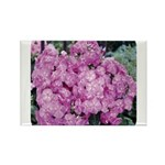 Phlox Lilac Rectangle Magnet