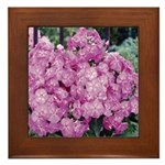 Phlox Lilac Framed Tile