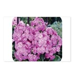 Phlox Lilac Postcards (Package of 8)