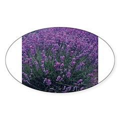 Lavandula - Lavender Oval Decal