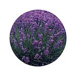 Lavandula - Lavender 3.5