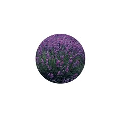 Lavandula - Lavender Mini Button (100 pack)