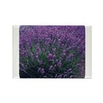 Lavandula - Lavender Rectangle Magnet (10 pack)
