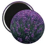 Lavandula - Lavender Magnet