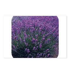 Lavandula - Lavender Postcards (Package of 8)