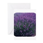Lavandula - Lavender Greeting Cards (Pk of 20)
