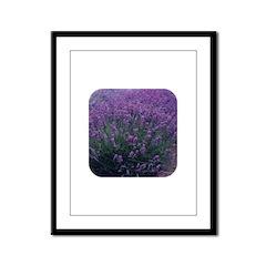 Lavandula - Lavender Framed Panel Print