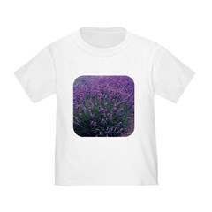 Lavandula - Lavender T