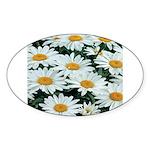 Shasta Daisies Oval Sticker