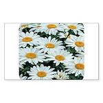 Shasta Daisies Rectangle Sticker
