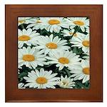 Shasta Daisies Framed Tile