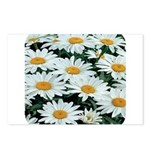 Shasta Daisies Postcards (Package of 8)