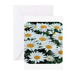 Shasta Daisies Greeting Cards (Pk of 10)