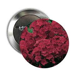 Phlox Dark Red 2.25