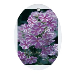 Phlox Lilac Stripe Oval Ornament