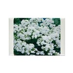 Phlox White Rectangle Magnet (10 pack)