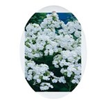 Phlox White Oval Ornament