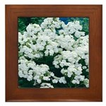 Phlox White Framed Tile