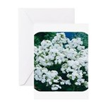 Phlox White Greeting Card