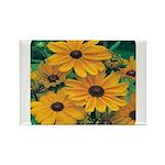 Rudbeckia - Black Eye Susan Rectangle Magnet (10 p